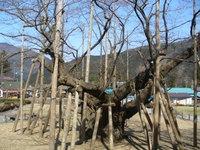 Blog_5_155