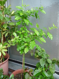Blog_200805_097_2