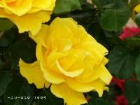 Blog_1238