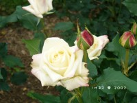 Blog_1244